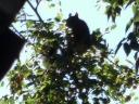 L'écureuil fait aussi ses réserves pour l'hiver.