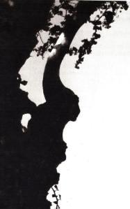 """Ombre d'une branche de platane. Photo Eliette Gensac, extraite de son livre """"Palabres de Platanes""""."""